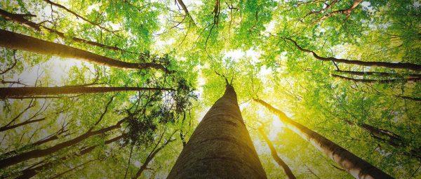 ecologia e cura dell'ambiente